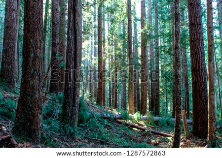 sun lit forest #1287572863