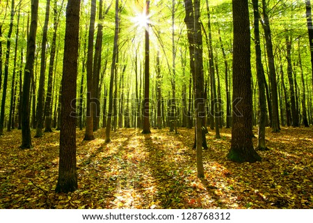 autumn forest trees. nature green wood sunlight backgrounds. #128768312