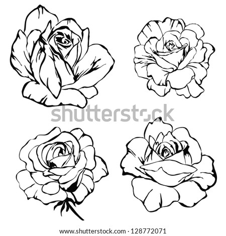 Floral set. Hand drawn illustrations of roses on white background