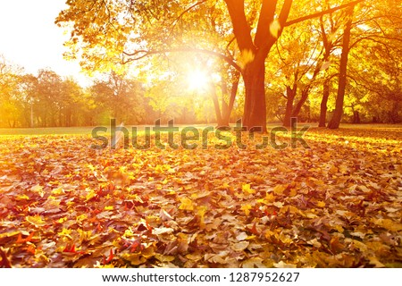 beautifull sunny sunset autumn landscape with october leaf  #1287952627