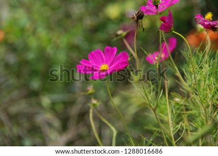 flowers and plant #1288016686