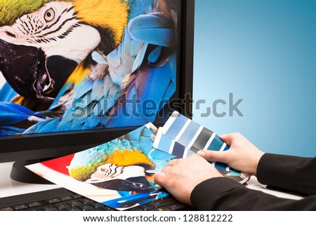 Graphic designer at work. Color samples. Blue parrot macaw bird photo