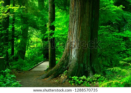 a picture of an exterior Pacific Northwest forest trail #1288570735