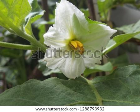 white flower in garden #1288793932