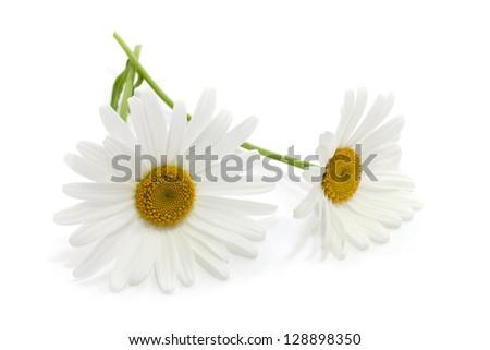 Daisy Flowers #128898350
