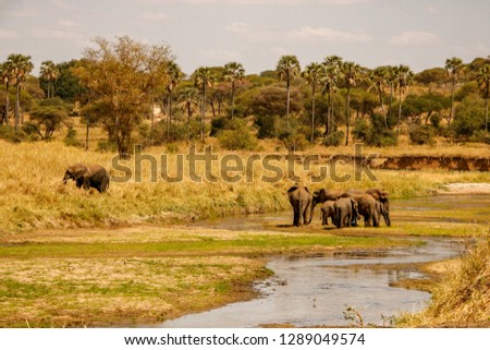 Elephants at the water hole in Serengeti National Park, Tanzania, Africa #1289049574