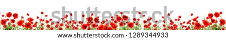 Poppies of different sizes on a white background.  #1289344933