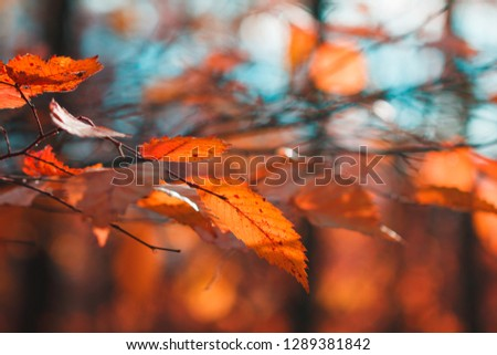 Red foliage in an autumn forest against sunlight.  Macro nature photography. #1289381842