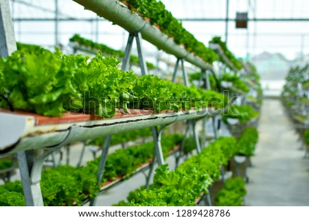 Hydroponic vertical farming systems #1289428786