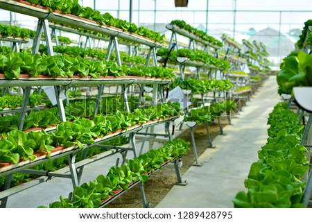Hydroponic vertical farming systems #1289428795