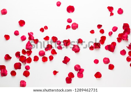 Valentine's Day. Rose flowers petals on white background. Valentines day background. Flat lay, top view, copy space. Royalty-Free Stock Photo #1289462731