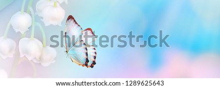 Violet blue color floral abstract background. Close up pink cosmos flower and butterfly with copy space. Soft style with vintage filter effect. Banner size. Panoramic view