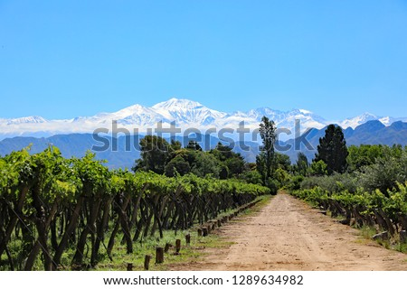 The beautiful snow capped Andes mountains and vineyard growing malbec grapes in the Mendoza wine country of Argentina, South America.  The Lujan de Cuyo valley 40 minutes from downtown Mendoza. #1289634982