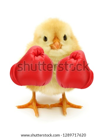 Crazy chick with red boxing gloves #1289717620