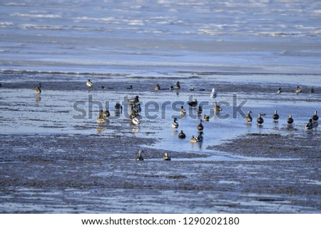 The birds of the sea #1290202180