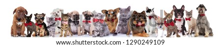 large team of happy elegant pets with red bowties and sunglasses standing, sitting and lying on white background #1290249109