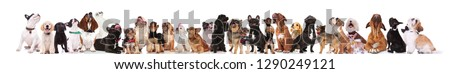 many different breeds of dogs looking up while standing and sitting on white background, wearing colored collars #1290249121
