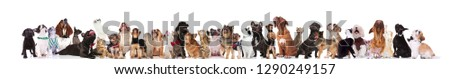 large curious group of adorable pets looking up while standing and sitting on white background. They are wearing bowties and collars #1290249157