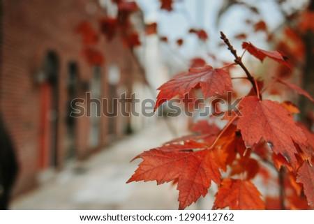Autumn fall leaves #1290412762