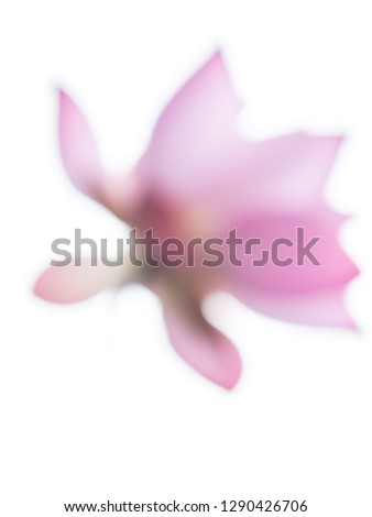 Blurry pink water lily in white background #1290426706