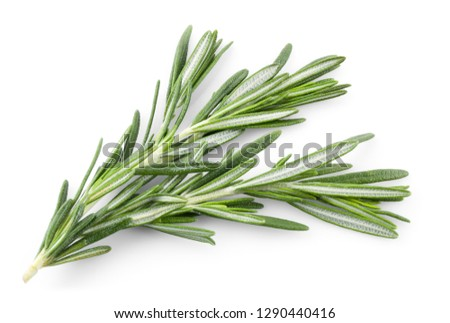 Rosemary isolated. Rosemary on white. Top view. #1290440416
