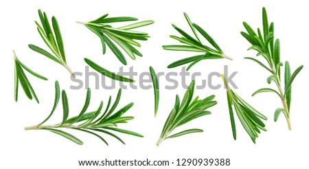 Rosemary twig and leaves isolated on white background with clipping path, close-up, collection #1290939388