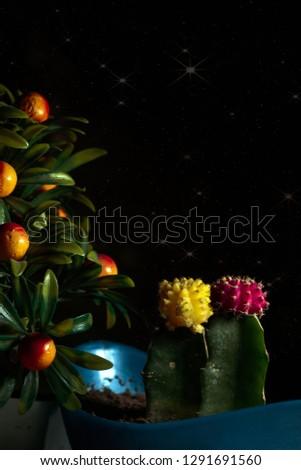 Dark Nature cactus   #1291691560