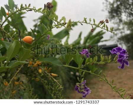 purple and orange flowers in the garden #1291743337