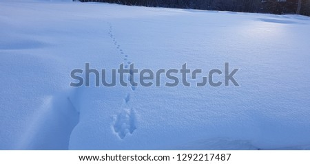 Traces of a wild animal in the snow. Trail of a forest animal in the snow. #1292217487