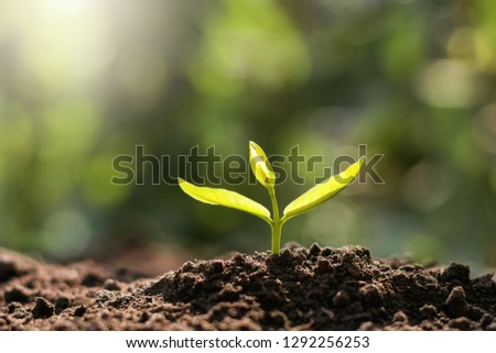 plant growing in morning light. eco concept earth day #1292256253