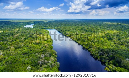 Amazon rainforest in Brazil #1292310916