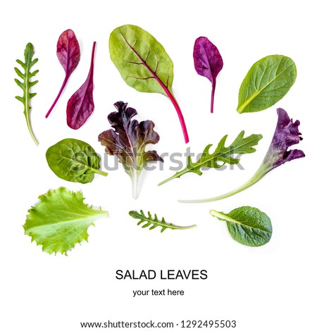 Salad leaves Pattern. Isolated Mix Salad leaves with Spinach, Chard, lettuce, rucola on the white background. #1292495503