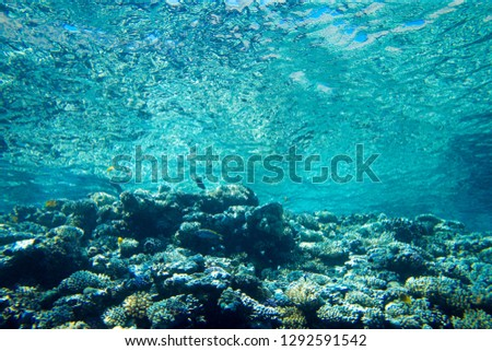 Tranquil underwater scene with copy space #1292591542