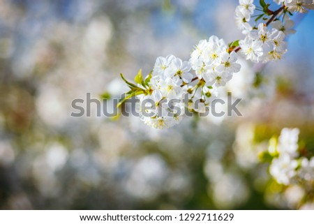 Spectacular ornamental garden with blooming lush trees on a idyllic sunny day. Concept of the ecology. Soft focus image. Flowering orchard in spring time. Awesome natural background. Beauty of earth. #1292711629