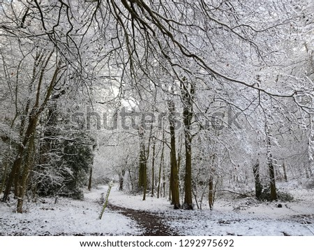 Winter wonderland Berkshire  #1292975692