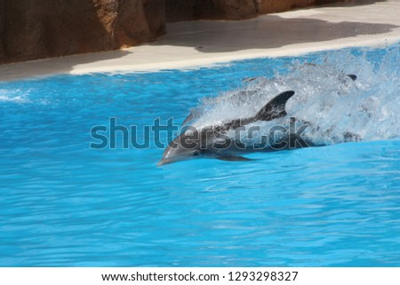 dolphin water sea #1293298327