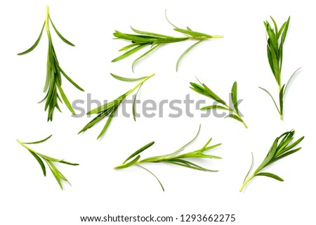 fresh tarragon herb isolated on the white background, top view #1293662275