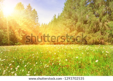 Wildflowers in spring on a sunny forest meadow #1293702535