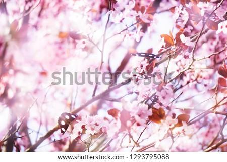flowering tree in springtime #1293795088