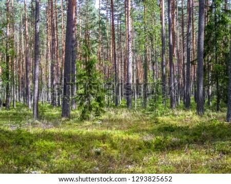 landscape in harku forest nature trail near Tallinn, Estonia #1293825652