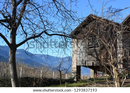 Mountains, trees and an old barn in an alpine village in south Tirol #1293837193