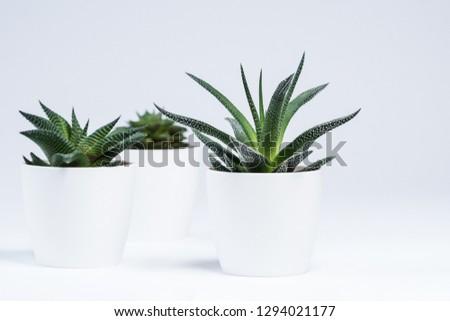 Succulents with white background #1294021177