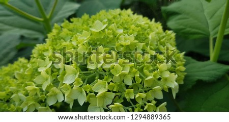 Beautiful green flower in the garden. #1294889365