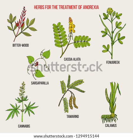 Best herbal remedies for anorexia. Hand drawn botanical vector illustration #1294915144