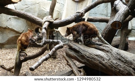 Animals from zoo #1294980532
