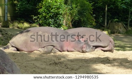 Animals from zoo #1294980535