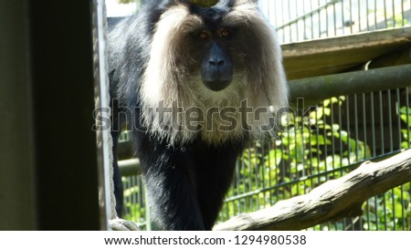 Animals from zoo #1294980538