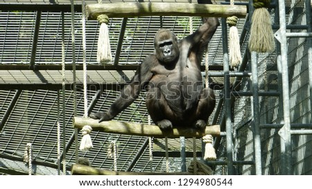 Animals from zoo #1294980544
