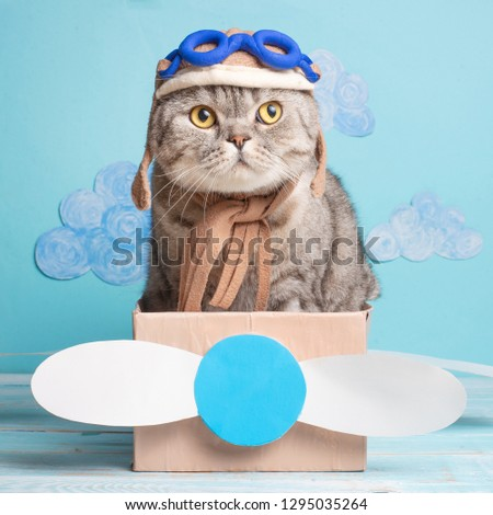 The cat sits a cute pilot Sedit aviator in a paper plane, a Scottish Whiskas in a mask and goggles of an airplane pilot. The concept of the pilot, super cat, flight. #1295035264