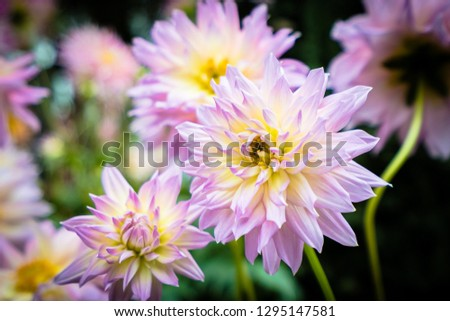 Beautiful colorful flower in the garden #1295147581